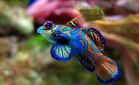 De tropische Pitvis